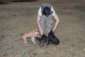 Volunteers remove pit bulls found chained on 10-acre lot